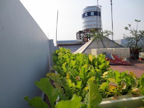 Sân thượng trồng rau và để bồn nước