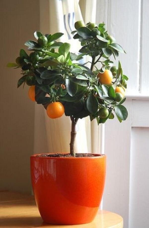 3-Cây họ cam quýt