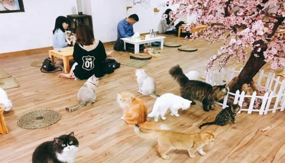 cafe mèo